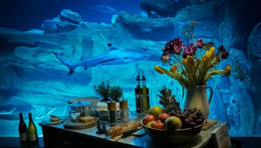 Airbnb Sayesinde Köpekbalıklarının Arasında Uyumak (2)