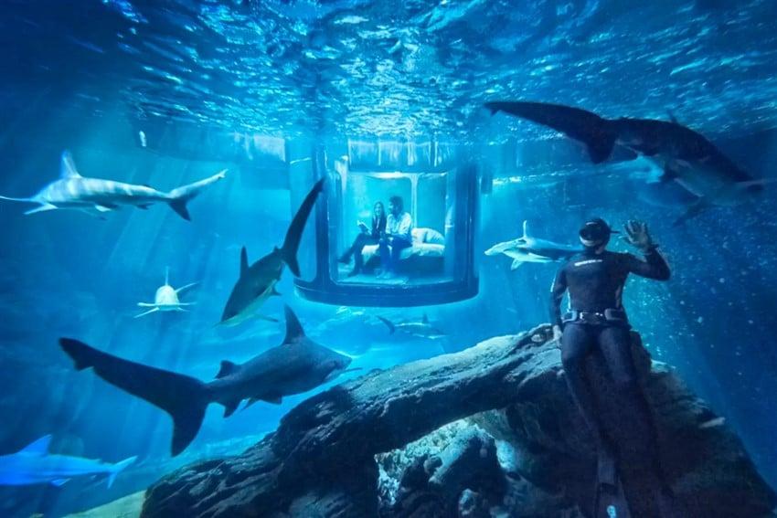Airbnb Sayesinde Köpekbalıklarının Arasında Uyumak Akvaryum