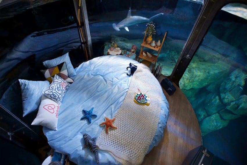Airbnb Sayesinde Köpekbalıklarının Arasında Uyumak