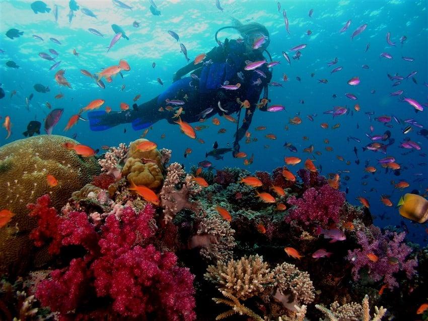 Yok Olmadan Gitmeniz Gereken 10 Yer Büyük Set Resifi'nde Dalış