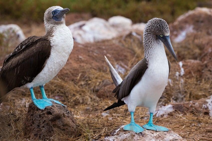 Yok Olmadan Gitmeniz Gereken 10 Yer Galapagos Adaları