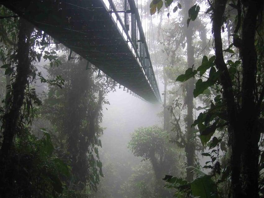 Yok Olmadan Gitmeniz Gereken 10 Yer Kosta Rika Bulut Ormanları