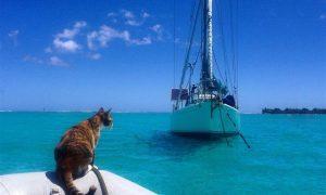 İşini Bırakıp Kedisiyle Birlikte Dünyaya Yelken Açan Kadın
