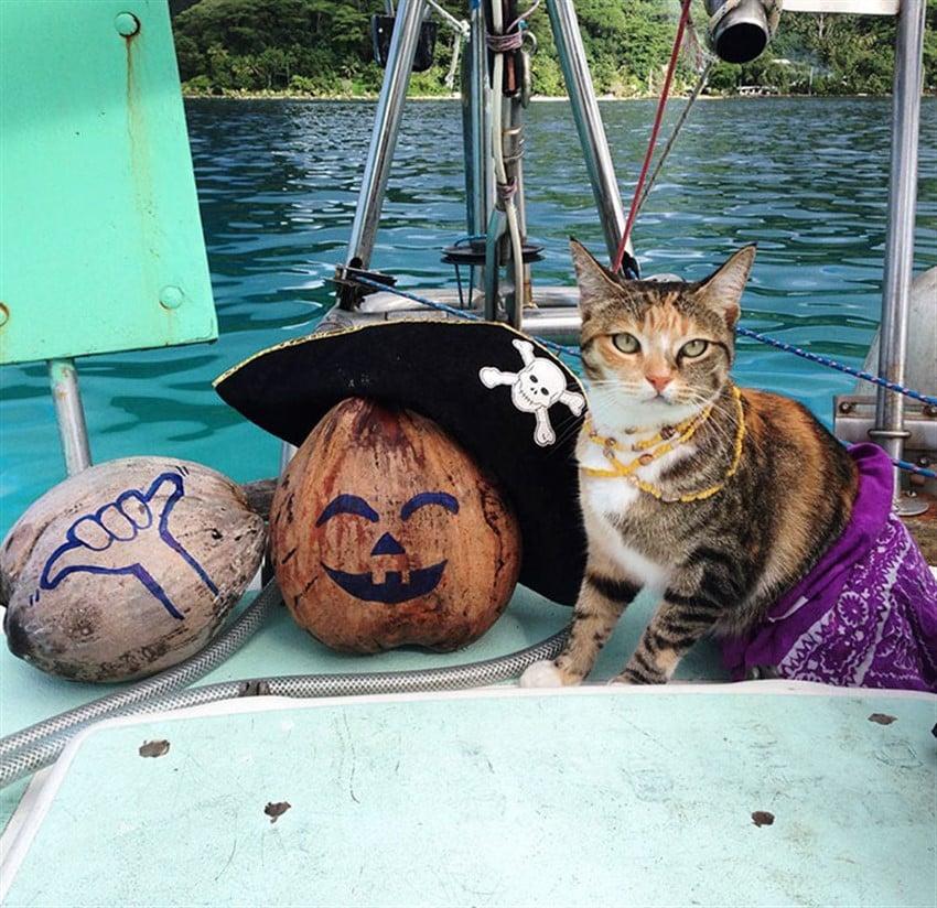 İşini Bırakıp Kedisiyle Birlikte Dünyaya Yelken Açan Kadın Liz Clark