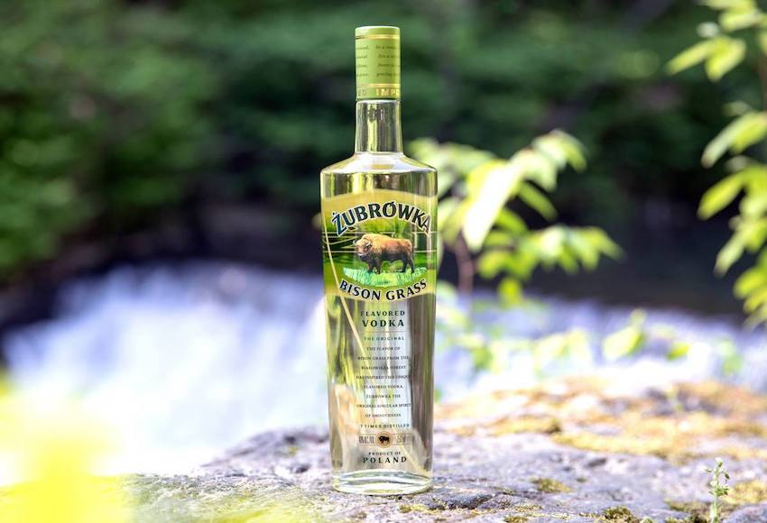 Polonya Zubrowka Bison Otu Votkası