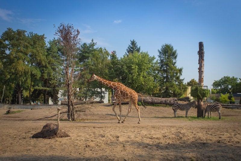 Wrocław Hayvanat Bahçesi