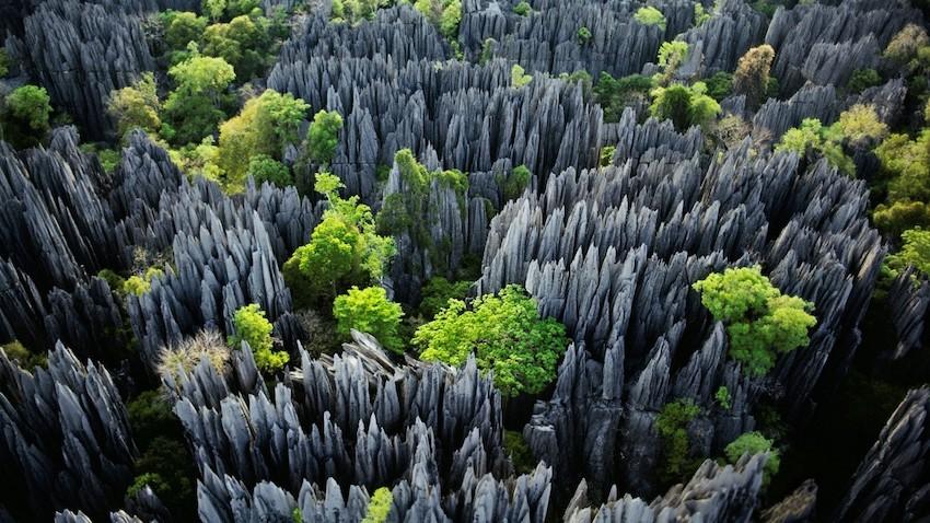 Tsingy Taş Ormanı, Madagaskar